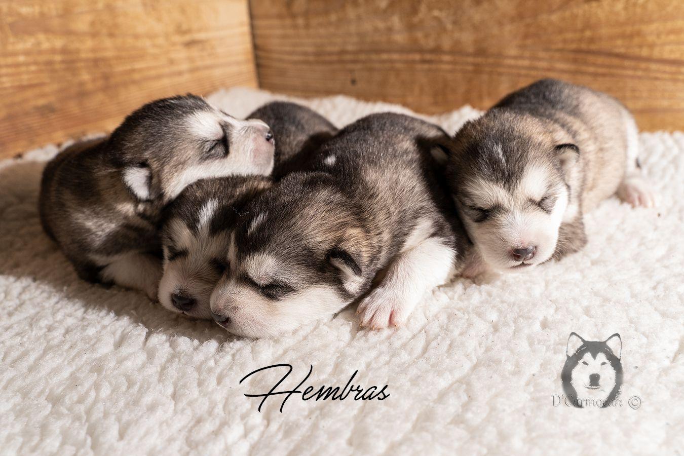 10 dias cachorros dcarmocan