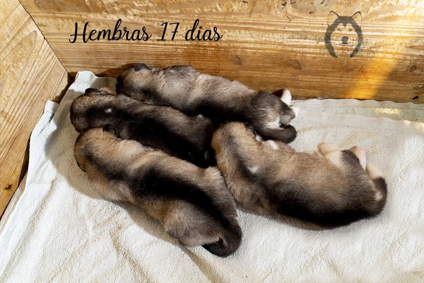 cachorros dcarmocan 17 dias